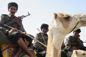 L'UNION EUROPÉENNE (UE) fournie 250 chameaux pour l'unité méhariste en Mauritanie
