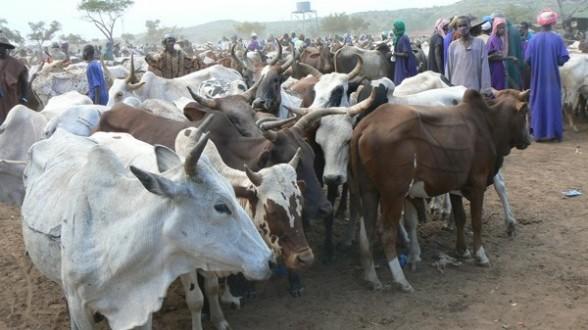 Covid 19 en Mauritanie : Hausse des prix à Sélibaby et inquiétude pour les éleveurs et le cheptel
