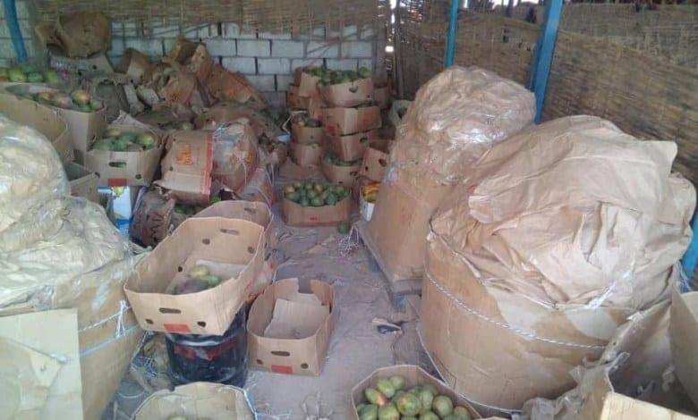Mauritanie : découverte de l'utilisation d'un gaz toxique pour la maturation des mangues